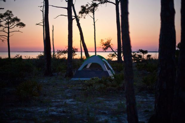 apalachicola national forest, franklin county, florida