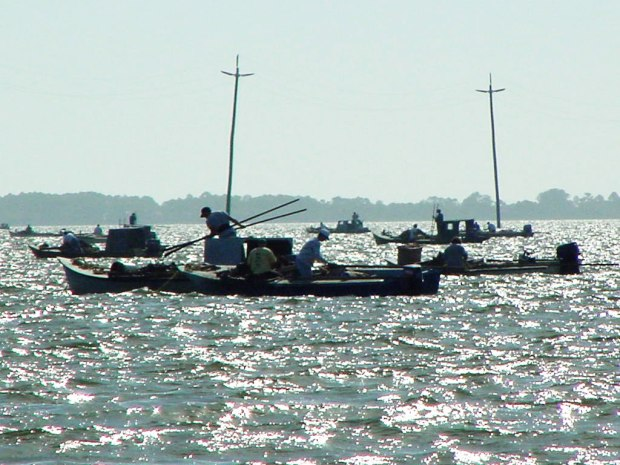 oysters, oystermen, oystering, apalachicola bay