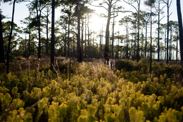 St. George Island, Florida, State Park, Trees