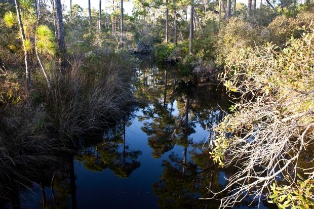 Tate's Hell, Florida, St. George Island, Florida, State Park,