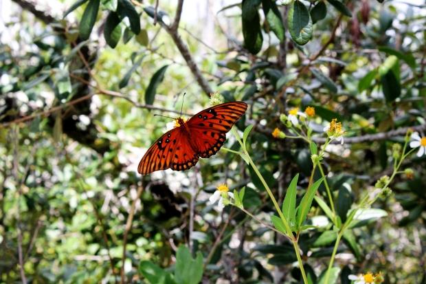 butterflies_ef_20130920_0002